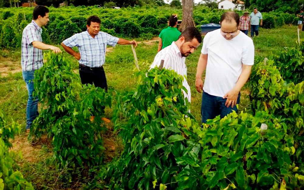 Satisfação dos produtores rurais e lavouras bem conduzidas.