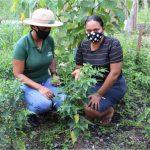 Assistência técnica à agricultores familiares de Rondônia foi essencial para o fortalecimento do setor produtivo durante a pandemia