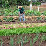 Governo de Rondônia: Mil dias voltados para o fortalecimento da agricultura familiar